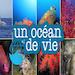 Un océan de Vie - Interview
